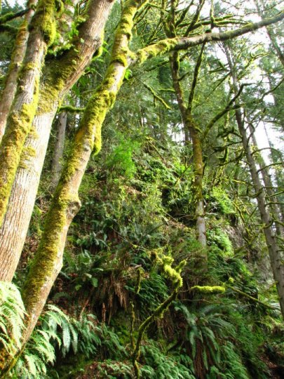 Seattle.naturetrail